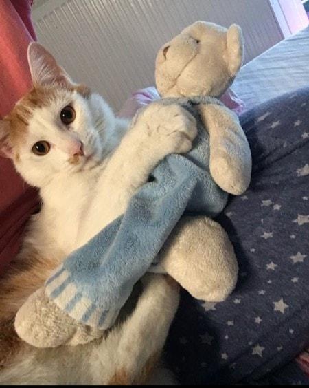 Dziś dzień kota?. Nasz Czosnek jest w formie i pozdrawia inne koty.?