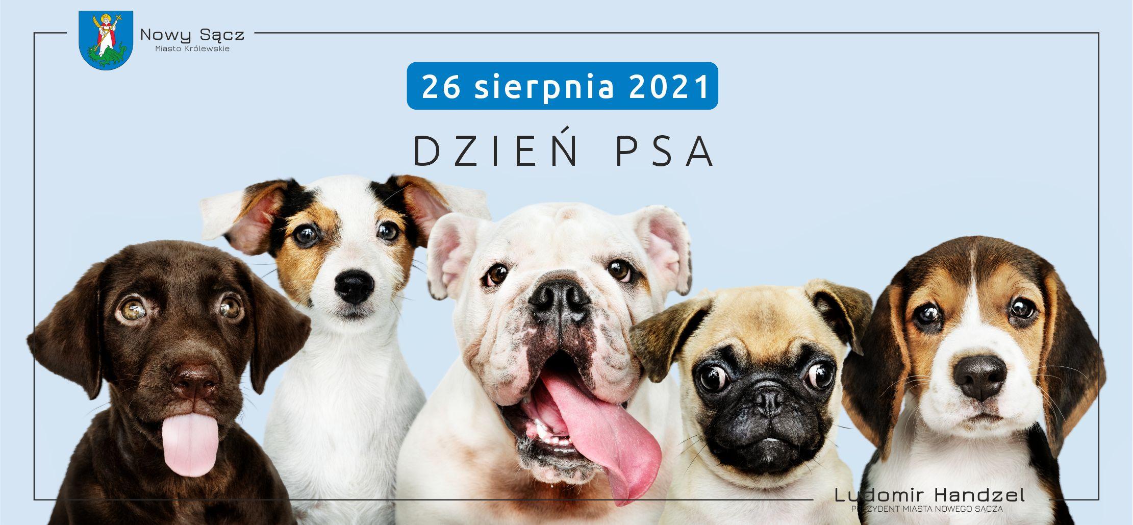 🦮 26 sierpnia – Międzynarodowy Dzień Psa.📣🐶🐕
